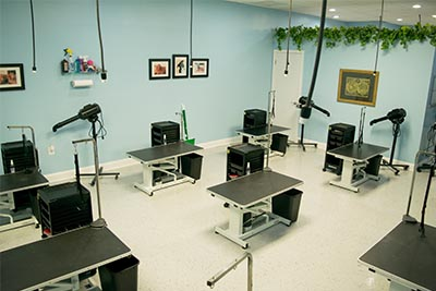 VA School of pet grooming facility